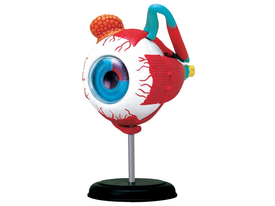 Anatómia tela 4D Oko
