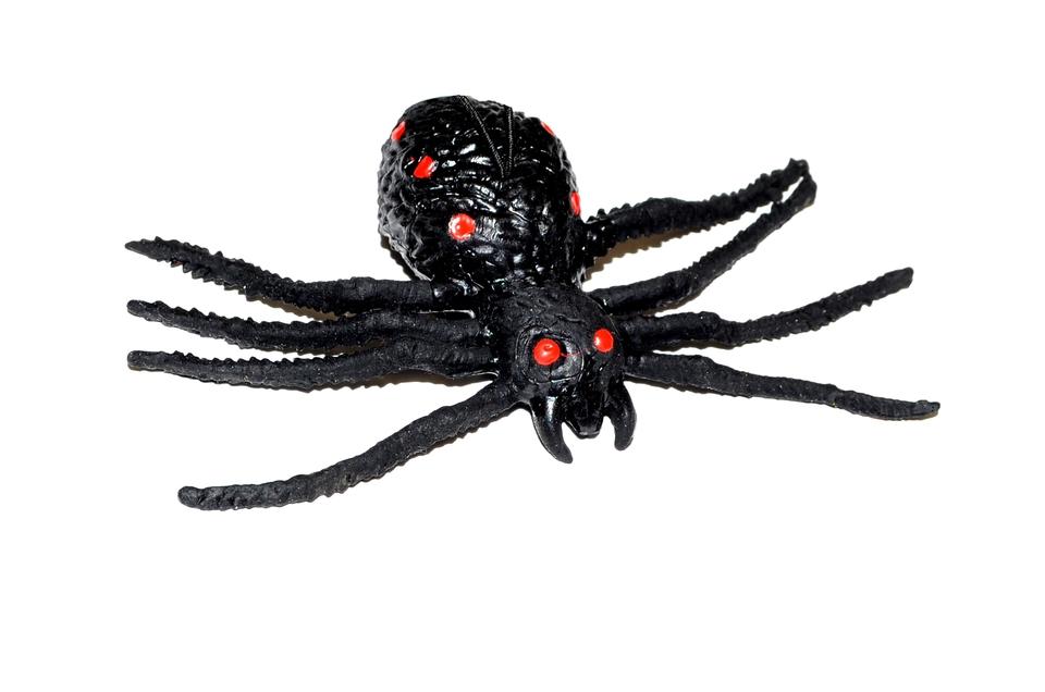 Pavúk gumový