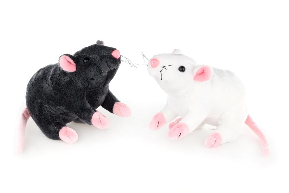 Potkan plyšový